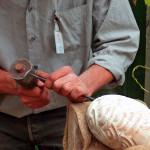 sculptor's hand