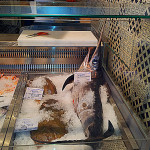 Personal Concierge Florence_fish shop